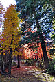 Fall colors on the top of Mogollon Rim (4017096882).jpg