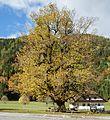 Ferlach Bodental Bodenbauer alte Linde 16102013 992.jpg