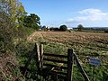 Field near Sandy Park Farm - geograph.org.uk - 1573850.jpg
