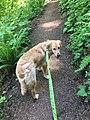 Fiona Walking on the Ridgeline Trail.jpg
