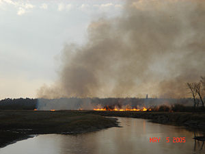 Fire in Chippewa National Forest.JPG
