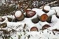 Firewood in Russia. img 08.jpg