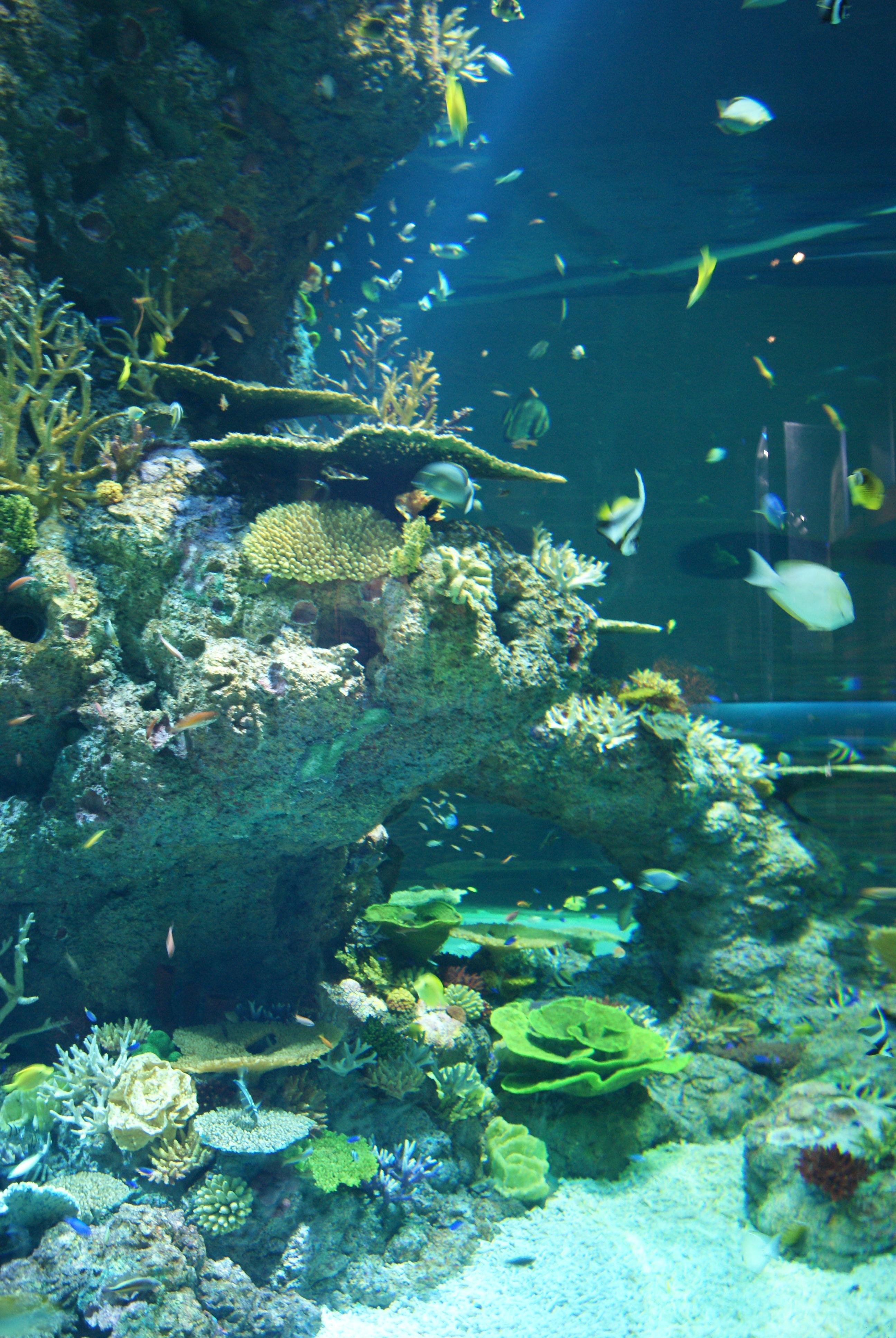 Fish aquarium in sentosa - File Fish In The S E A Aquarium Marine Life Park Resorts World Sentosa Singapore 20130105 05 Jpg