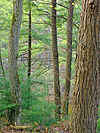 Fishing Creek Nature Preserve (1).jpg