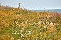 Flamborough Head, East Yorkshire, UK, 08082015, jcw1967 (12) (32727234184).jpg