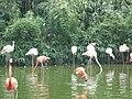 Flamingo1310.JPG