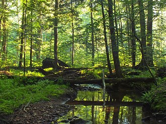 United States National Forest - Tionesta Research Natural Area in the Allegheny National Forest, Pennsylvania.