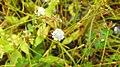 Flora from Madayipara DSCN2624.jpg