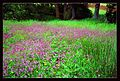 Flores - panoramio - Javier B.jpg