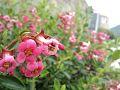 Flores da Régua.jpg