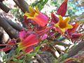 Flores de una suculenta.jpg