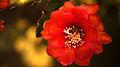 Flower, botanic garden Munich - 3.jpg