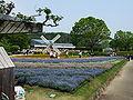 Flower-center133513.jpg