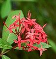 Flower (133009259).jpeg