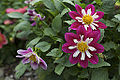 Flower (4429063434).jpg