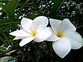 Flower 160435.jpg