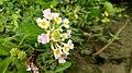 Flower 52.jpg