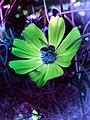 Flower with bee glorifying nature.jpg