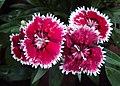 Flowers - Uncategorised Garden plants 06.JPG