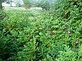 Flowers 27 June 2010 (18).JPG