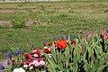 Flowers on Potsdam street 3 (April, 2018).jpg