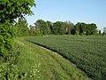 Footpath near Shepreth - geograph.org.uk - 1309950.jpg