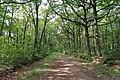 Forêt domaniale de Bois-d'Arcy 50.jpg