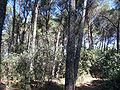 Forest - Parc del Laberint d'Horta - Barcelona.jpg