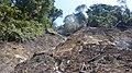 Forest Landslides.jpg