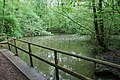 Forest Pond - geograph.org.uk - 1326493.jpg