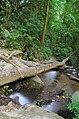 Forest Slurup B.JPG