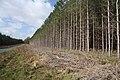Forest edge near Mildenhall - geograph.org.uk - 1198346.jpg