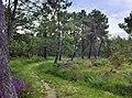 Forest in St-Germain, Basse-Normandie, France.jpg