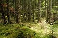 Forest in Yatsugatake 27.jpg