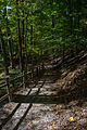 Forest path 04 - Mount Vernon.jpg