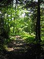 Forest path Frauenberg Schorndorf 2012.jpg