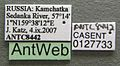 Formica lugubris casent0127733 label 1.jpg