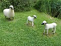 François-Xavier Lalanne Moutons et agneaux.jpg