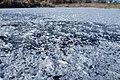 Frozen pond Horan Natural Area Wenatchee Washington 2.jpg