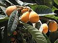 Fruit trees עצי פרי (2).jpg