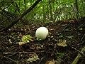 Fungus - panoramio (2).jpg