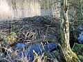Gützkow-Fähre-Biber-0704j-014.jpg