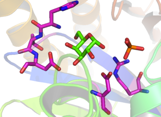 Galactokinase - Image: Galactokinase crystal structure