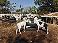 GambiaSerrekundaBrikama019 (12029164255).jpg