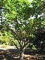 Gardenology.org-IMG 0761 hunt07mar.jpg