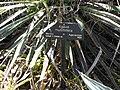 Gardenology.org-IMG 2503 hunt0903.jpg