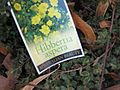 Gardenology.org-IMG 2750 ucla09.jpg
