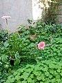 Gardens in Baghdad 32.jpg
