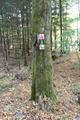 Gedern Steinberg Spiessweiher NR 82683 VHC Hiking Trail E.png