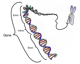 遺伝子 wikipedia